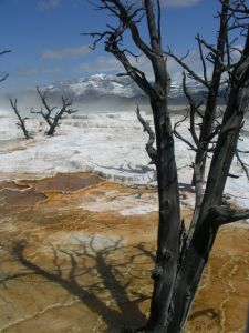 1090755_sulpher_springs_yellowstone_park.jpg