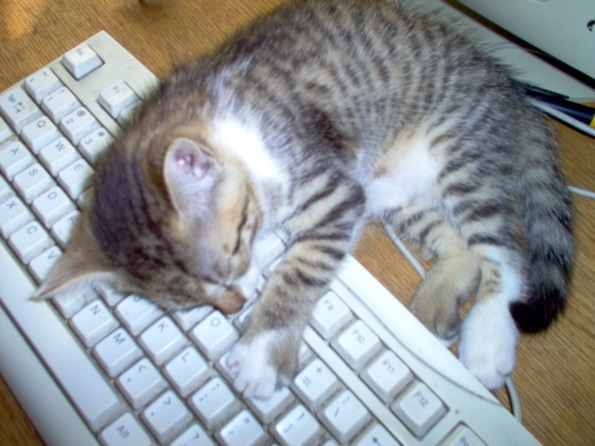 Cat on the keyboard
